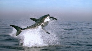 planetearth-shark-103814
